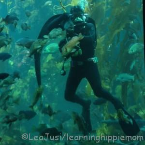 Wolf Eel and diver in Kelp Forest