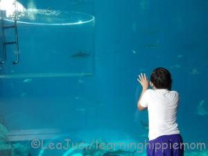 Looking at Sharks in Adventure Cove SG